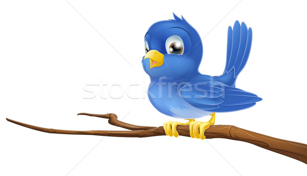 Bluebird on tree branch Stock photo © Krisdog