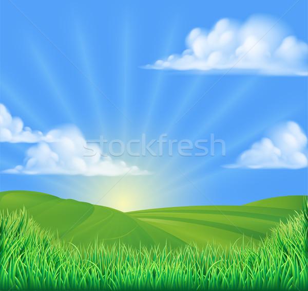 Heuvels veld zon boom zomer groene Stockfoto © Krisdog