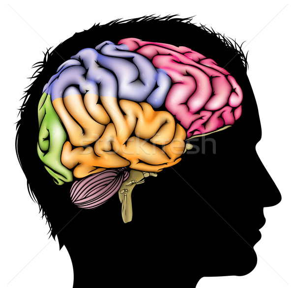 Brain silhouette concept Stock photo © Krisdog