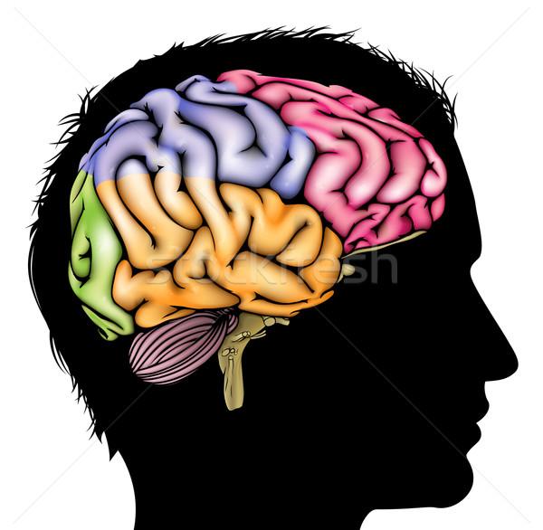 Cerebro silueta cabeza desarrollo aprendizaje Foto stock © Krisdog