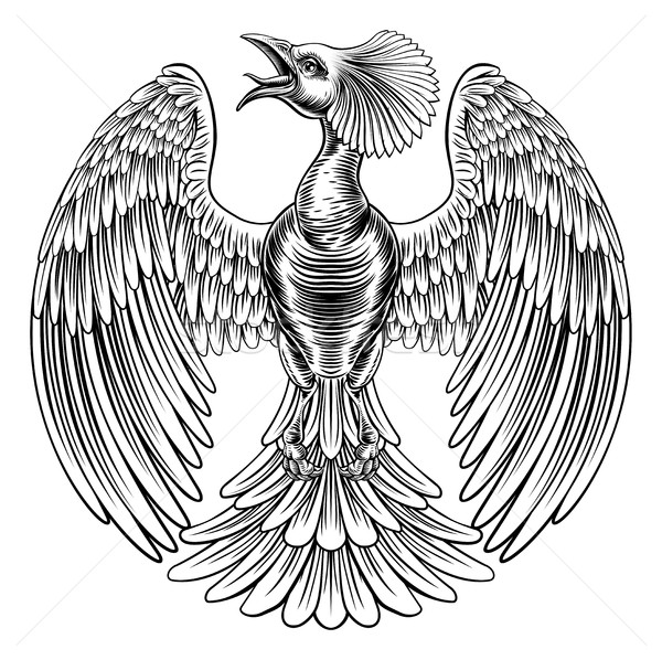 Paon phoenix oiseau design originale illustration Photo stock © Krisdog