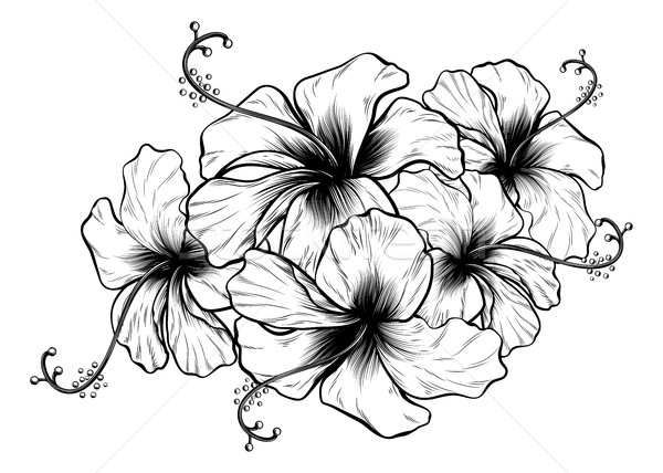 Hibiscus Flowers Vintage Retro Style Woodcut Engraved Etching  Stock photo © Krisdog