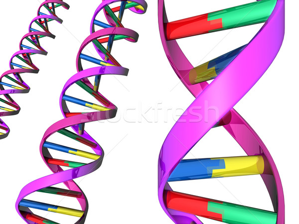 Illustration of DNA double helix Stock photo © Krisdog