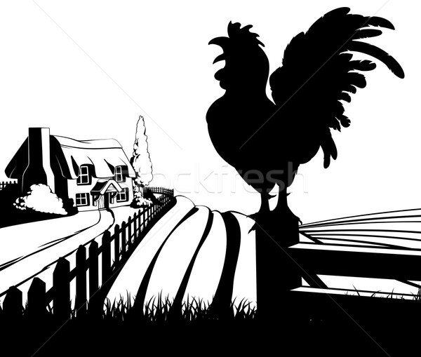 Cockerel crowing farm illustration Stock photo © Krisdog