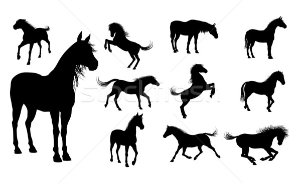 Silhouette Horses Stock photo © Krisdog