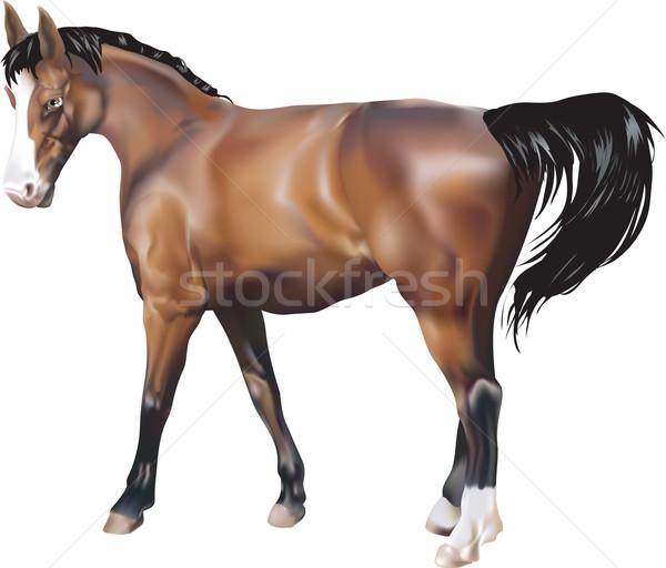 Ló illusztráció terv szépség verseny állat Stock fotó © Krisdog