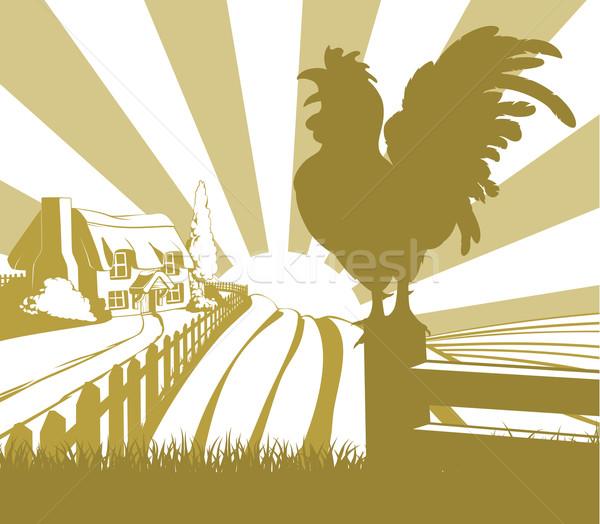 Rooster farm field landscape Stock photo © Krisdog
