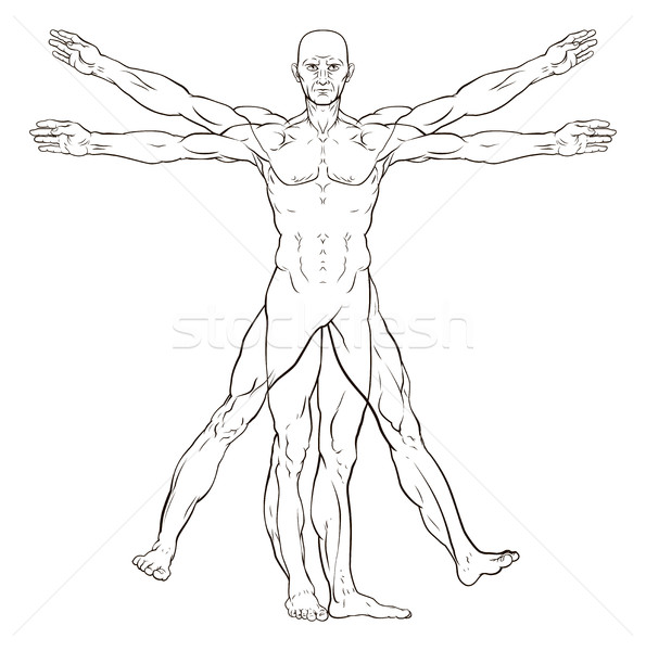 Da Vinci Style Vitruvian Man Stock photo © Krisdog