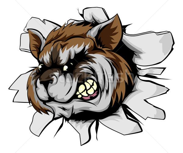 Raccoon sports mascot breakthrough Stock photo © Krisdog