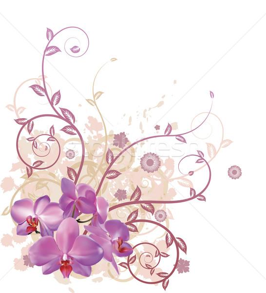 Cool orchid floral background Stock photo © Krisdog