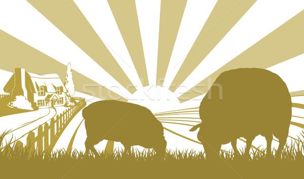 Moutons ferme domaine scène maison chalet Photo stock © Krisdog
