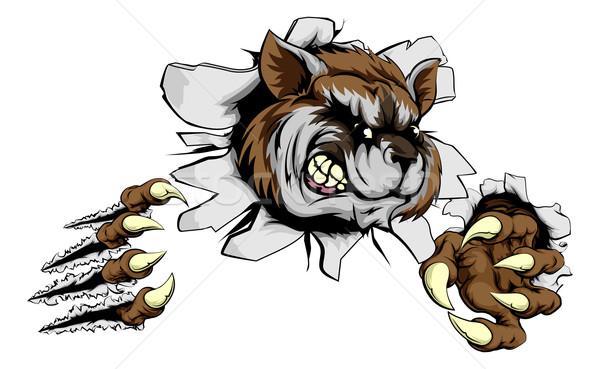 Raton laveur griffe percée effrayant mascotte forte Photo stock © Krisdog