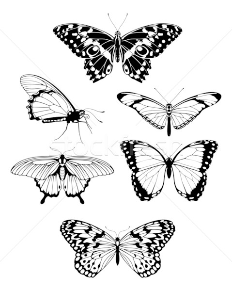 Beautiful stylised butterfly outline silhouettes Stock photo © Krisdog
