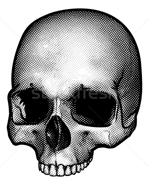 Stock photo: Skull Drawing