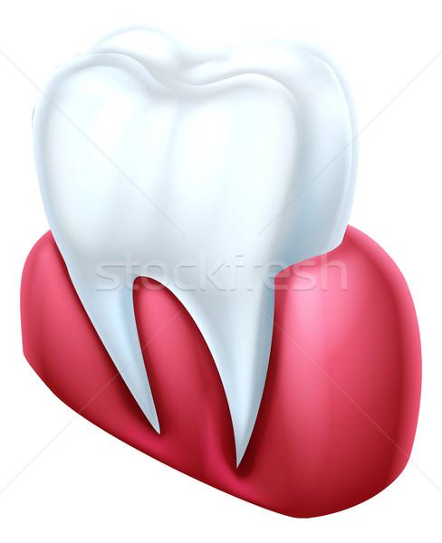 Tand gom tandheelkundige medische illustratie Stockfoto © Krisdog