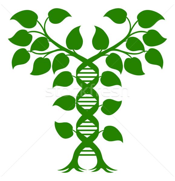 Double Helix DNA Plant Concept Stock photo © Krisdog