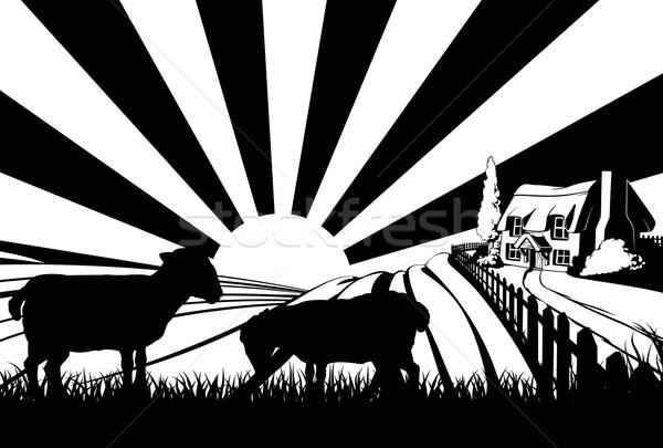 Sheep field concept Stock photo © Krisdog