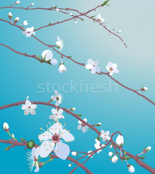 blossom background Stock photo © Krisdog