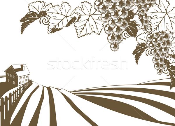 Vineyard Grapevine Farm Illustration Stock photo © Krisdog