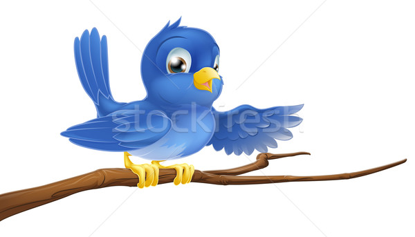 Bluebird sitting on  branch pointing Stock photo © Krisdog