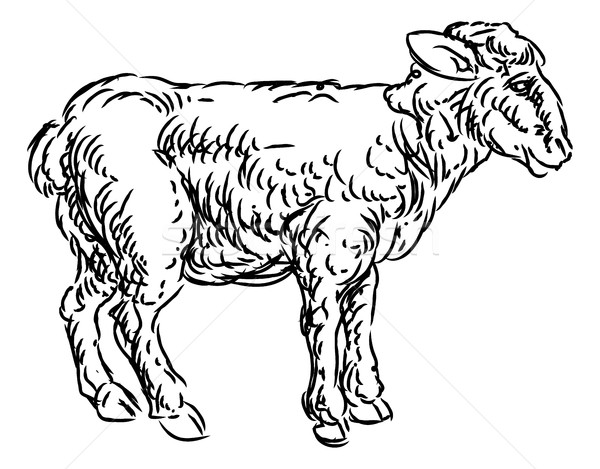 Stock photo: Lamb Sheep Food Grunge Style Hand Drawn Icon