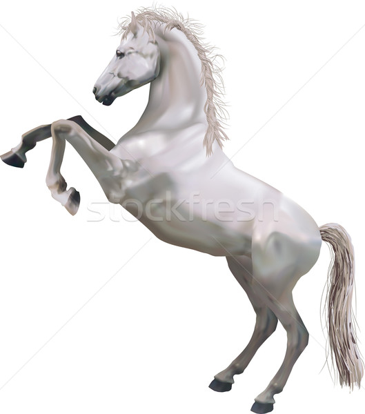 rearing horse illustration Stock photo © Krisdog