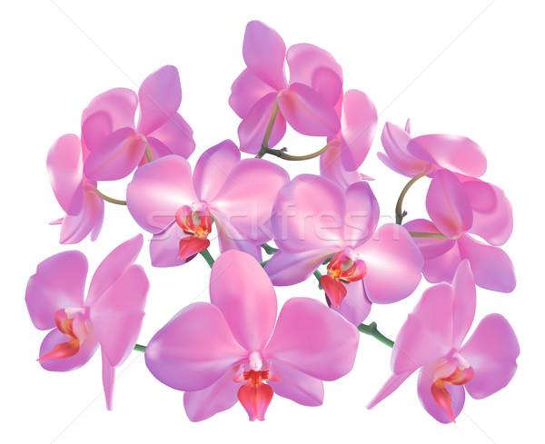 Orchids Stock photo © Krisdog