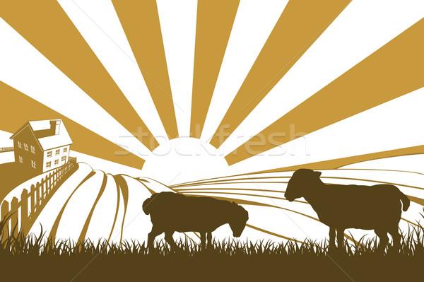 Silhouette sheep or lambs on farm Stock photo © Krisdog