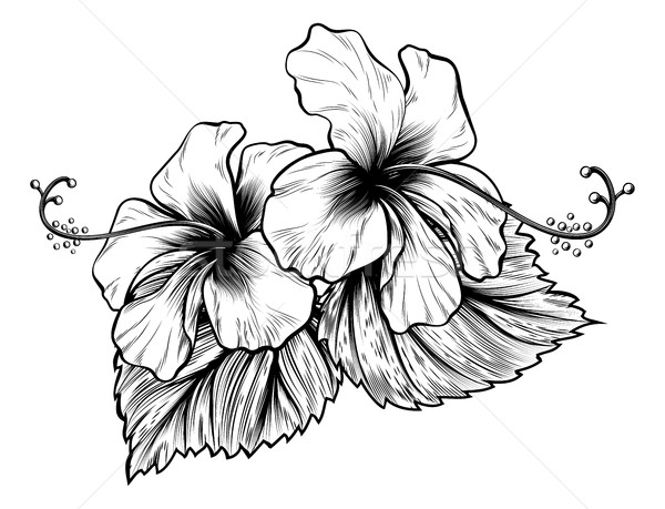 Hibiscus Flowers Vintage Style Woodcut Engraved Etching  Stock photo © Krisdog