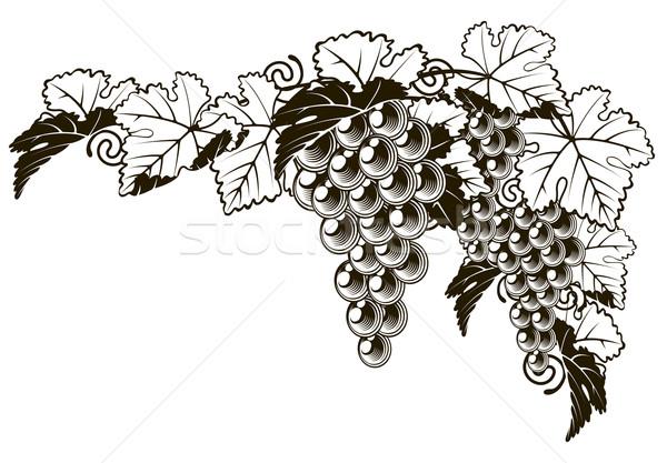 Grapes vintage style design Stock photo © Krisdog