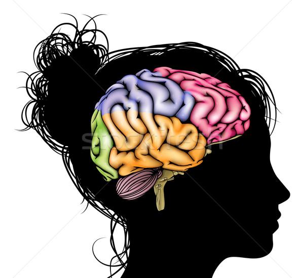 Woman brain concept Stock photo © Krisdog