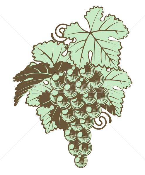 Bunch of Grapes on Vine Stock photo © Krisdog