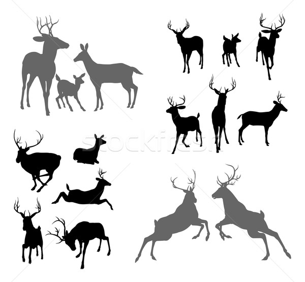 Deer stag fawn and doe silhouettes Stock photo © Krisdog