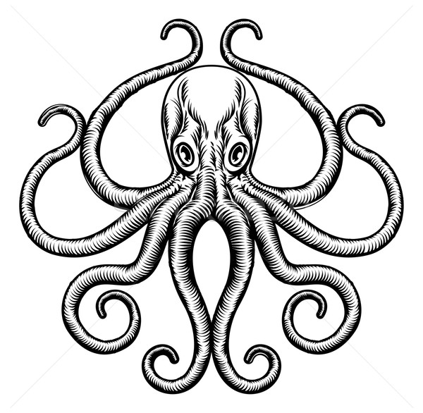 Octopus or Squid Illustration Stock photo © Krisdog