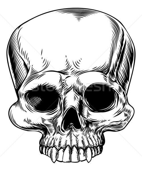 Skull drawing Stock photo © Krisdog