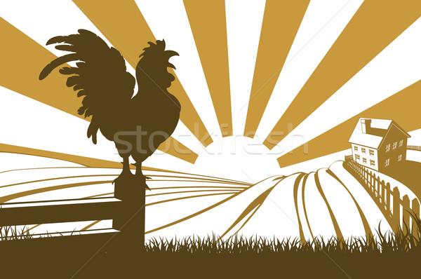 Silhouette cockerel crowing on farm Stock photo © Krisdog