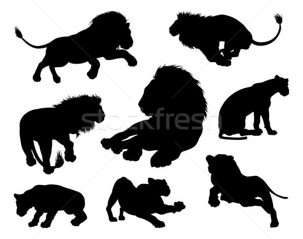 Lions Silhouettes Stock photo © Krisdog