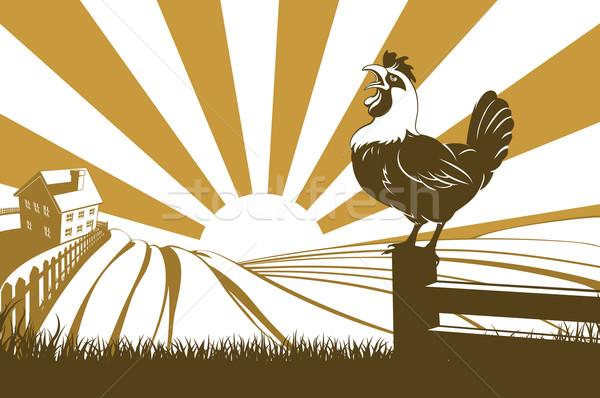 Farm and rooster Stock photo © Krisdog