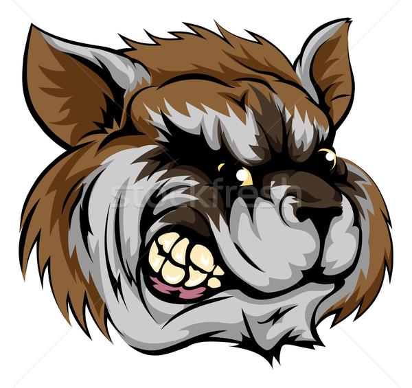 Raccoon mascot character Stock photo © Krisdog