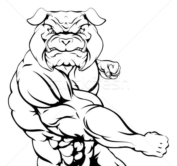 Fighting bulldog Stock photo © Krisdog