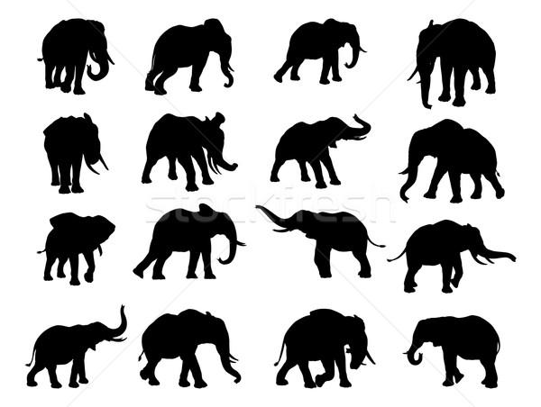 Elephant Silhouettes Stock photo © Krisdog