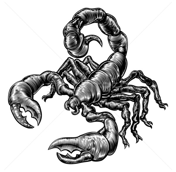 Vintage woodblock style scorpion Stock photo © Krisdog