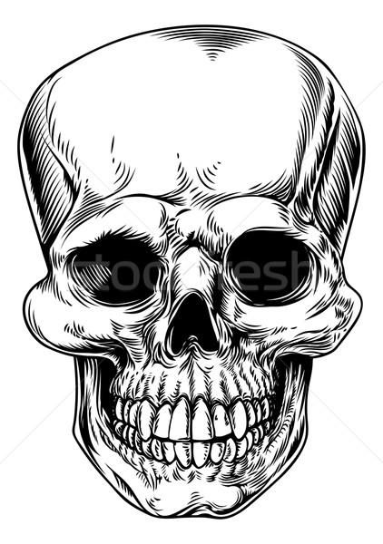 Klasszikus koponya illusztráció emberi szörnyű fej Stock fotó © Krisdog