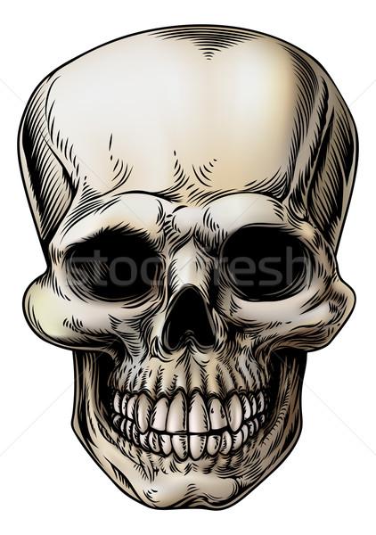 Human Skull Illustration Stock photo © Krisdog