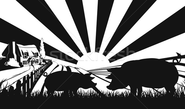 Pigs in silhouette in farm field Stock photo © Krisdog