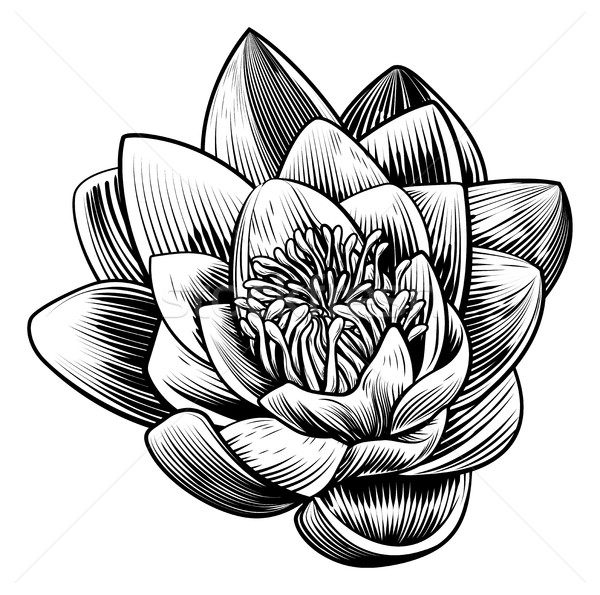 Water Lily Lotus Flower Vintage Woodcut Engraved Etching  Stock photo © Krisdog