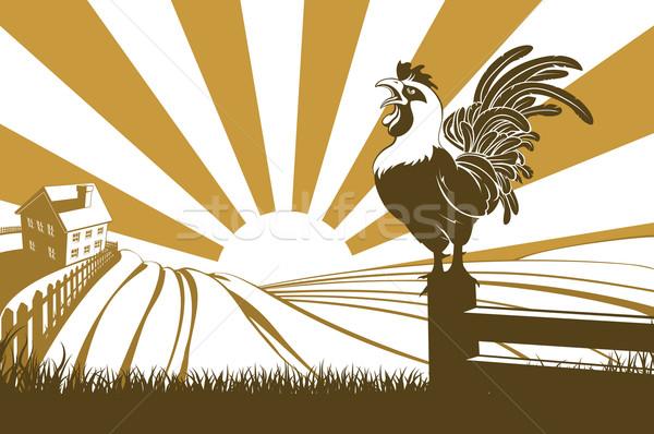 Farm chicken crowing at dawn Stock photo © Krisdog
