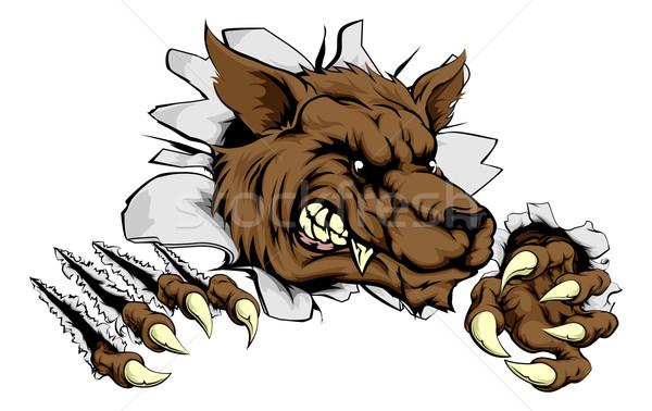 Werewolf or wolf clawing through Stock photo © Krisdog