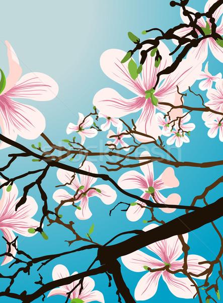 beautiful flower background Stock photo © Krisdog