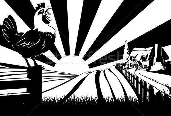 Crowing rooster farm house scene Stock photo © Krisdog